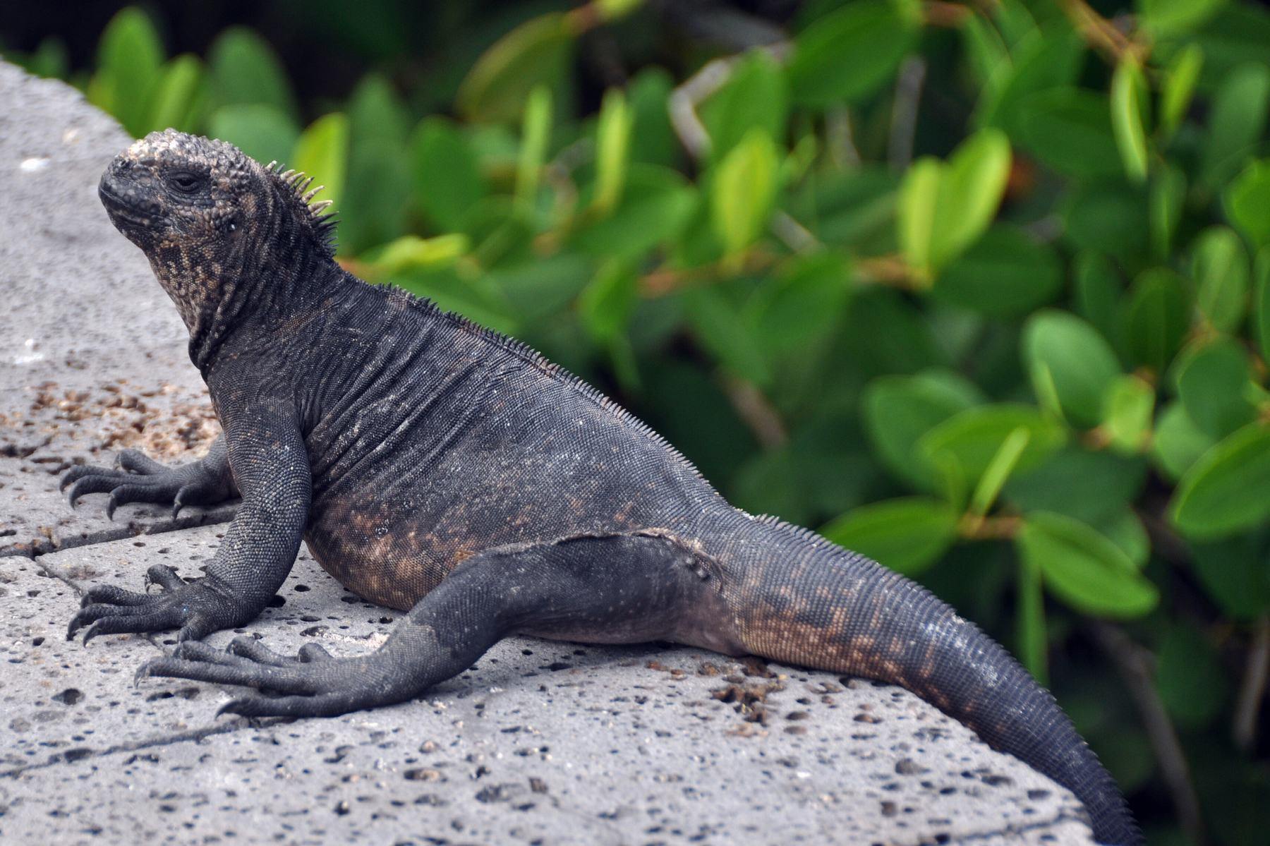 sailing Galapagos Islands
