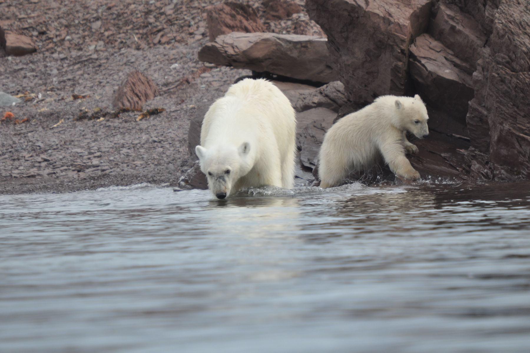 Spitsbergen with Anne-Margaretha polar bears