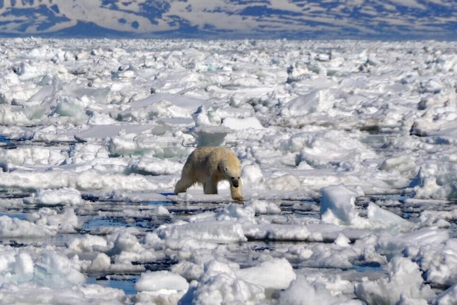 ijsbeer-op-drijfijs-spitsbergen