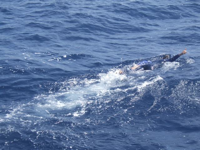 sam-swimming whale-next-wave-of-biscay