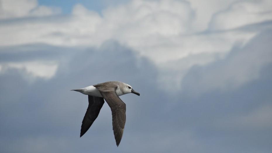albatros-drake-passage