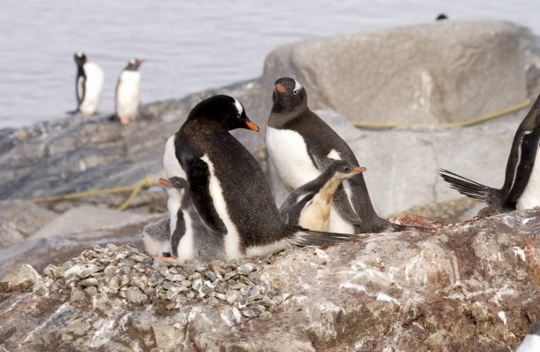 pinguins-port-lockroy-antarctica