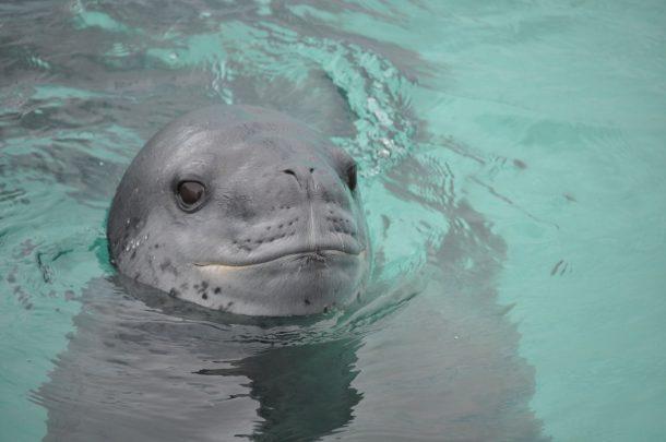 zeeluipaard-naast-anne-margaretha